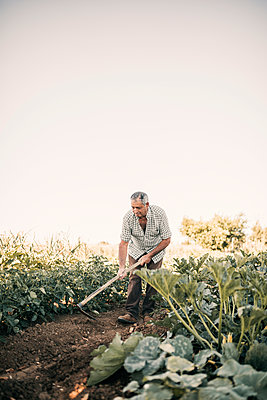 Senior male farmer digging with shovel in vegetable garden - p300m2293512 by LUPE RODRIGUEZ
