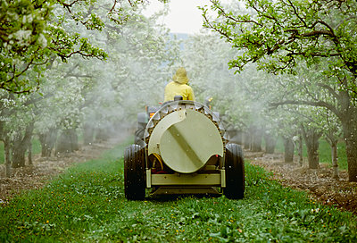 Agriculture - Chemical application, a tractor with a fan-jet sprayer applying spray on Bartlett pear orchard during Spring bloom / Washington, USA. - p442m905783 by Gary Holscher