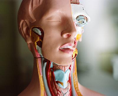 Anatomic model - p453m2152870 by Mylène Blanc