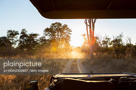 Safari vehicle at sunrise, Okavango Delta, Botswana. - p1100m2300937 by Mint Images