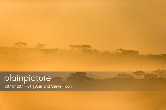iMfolozi game reserve at dawn, KwaZulu-Natal, South Africa - p871m2077701 by Ann and Steve Toon