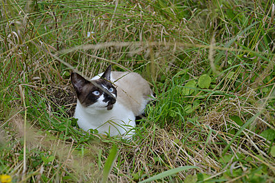 A cat in the garden - p1631m2288338 by Raphaël Lorand