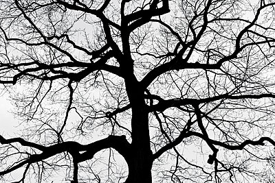 Bare tree - p212m901160 by Edith M. Balk