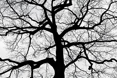Stammbaum - p212m901160 von Edith M. Balk
