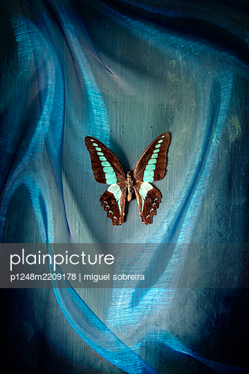 Exotic butterfly placed on blue fabric  - p1248m2209178 by miguel sobreira