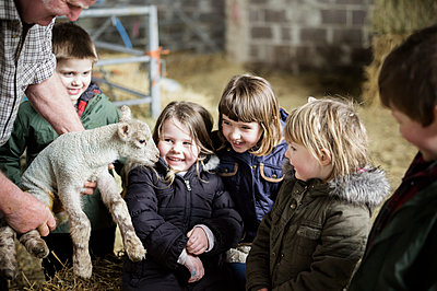 Children and new-born lambs in a lambing shed. - p1100m906713f by Emily Hancock