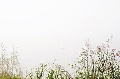 Fog - p1229m1165805 von noa-mar