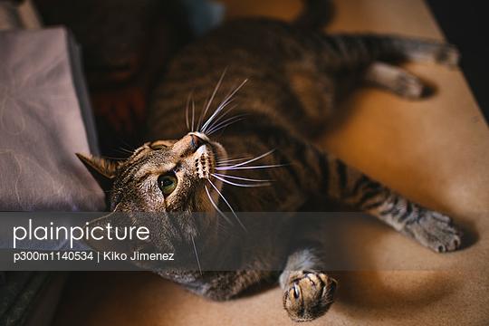 Portrait of curious tabby cat - p300m1140534 by Kiko Jimenez