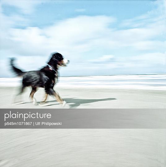 Zielstrebig - p545m1071867 von Ulf Philipowski