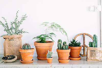 Plants in pots - p312m2050158 by Linda-Pauline Arousell