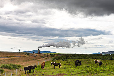 Icelandic horses in pasture with geothermal steam visible in background, Iceland - p623m659060f by Sandro Di Carlo Darsa