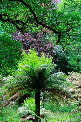 Glendurgan Garden, Cornwall - p977m934726 by Sandrine Pic