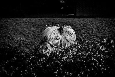 Horse sinking in moor - p1118m1539775 by Tarik Yaici