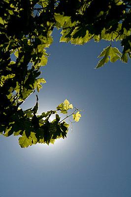 Sonne - p3050200 von Dirk Morla