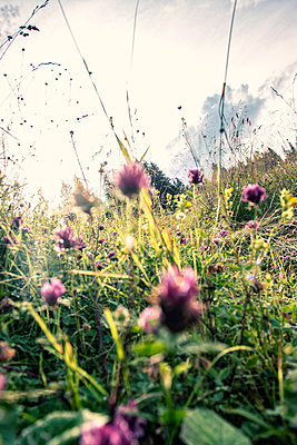 Meadow with wild flowers - p879m2284105 by nico