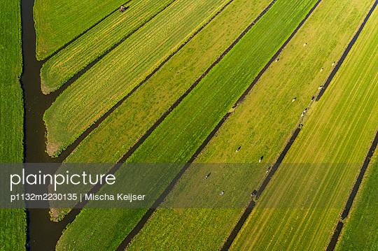 Netherlands, Field - p1132m2230135 by Mischa Keijser