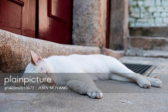 Schlafende Katze - p1423m2013673 von JUAN MOYANO