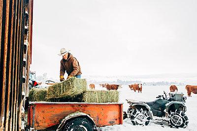 Caucasian farmer hauling hay near snowy barn - p555m1312066 by Inti St Clair