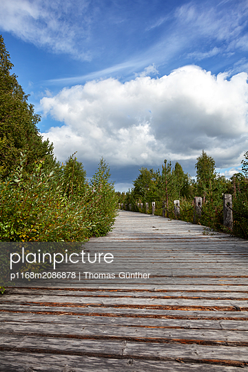 Auf dem Holzweg - p1168m2086878 von Thomas Günther