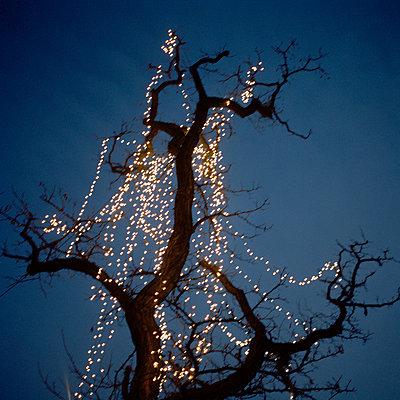 Lichterketten in einem Baum - p949m658308 von Frauke Schumann