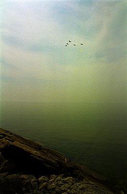 Toronto Island am Lake Ontario - p9791407 von Jain photography