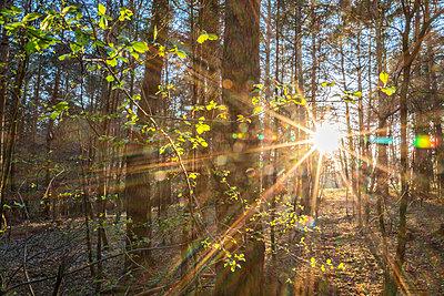 Sonnenuntergang - p1205m2175761 von Toni Anzenberger