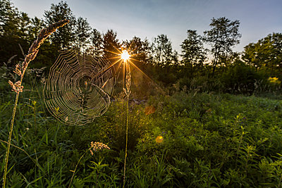A spider web in the morning in a field in Meredith, New Hampshire. - p343m1443417 by Jerry Monkman