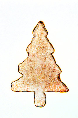 Angebrannter Papierweihnachtsbaum - p451m2228637 von Anja Weber-Decker