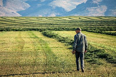 Caucasian farmer walking in field checking crop - p555m1303706 by Steve Smith