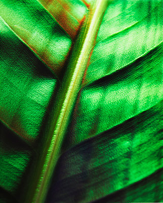 Detail Of Green Leaf  - p847m1529173 by Mikael Andersson