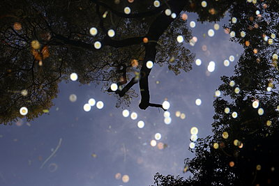 Coins in a  pond - p1063m1538364 by Ekaterina Vasilyeva