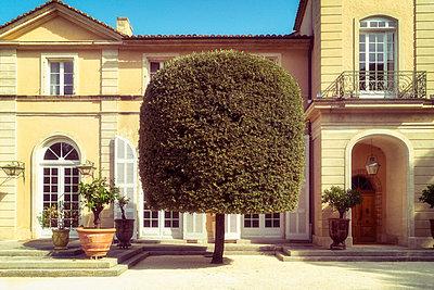 Sculpted Tree - p1154m2092935 by Tom Hogan