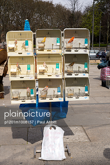 Birdcages, Porto - p1201m1008157 by Paul Abbitt