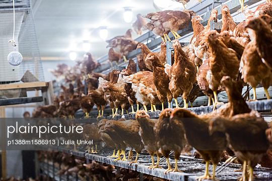 Hühnerstall 1 - p1388m1586913 von Julia Unkel