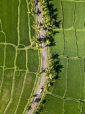 Indonesia, Bali, Ubud, Aerial view of rice fields - p300m2042657 by Konstantin Trubavin