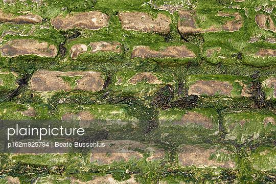 Von Algen überzogen - p162m925794 von Beate Bussenius
