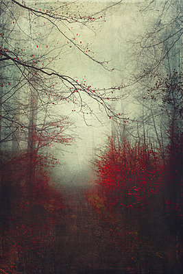 Broad-leaved trees in autumn - p300m1156803 by Dirk Wüstenhagen