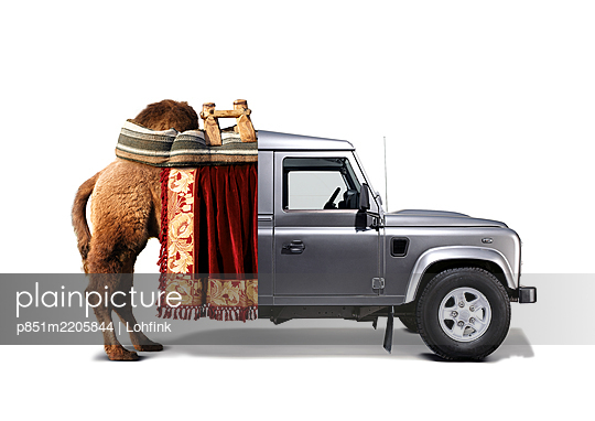 Bizarre combination, jeep and camel - p851m2205844 by Lohfink