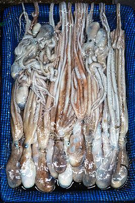 Fresh octopus - p226m1444533 by Sven Görlich