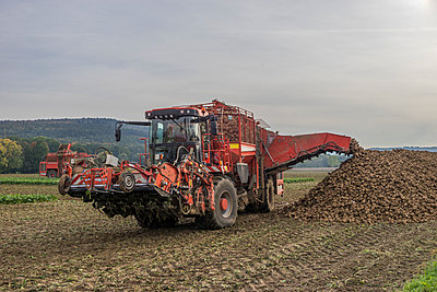 Germany, Lower Saxony, harvester, harvesting sugar beet - p300m1166037 by Patrice von Collani