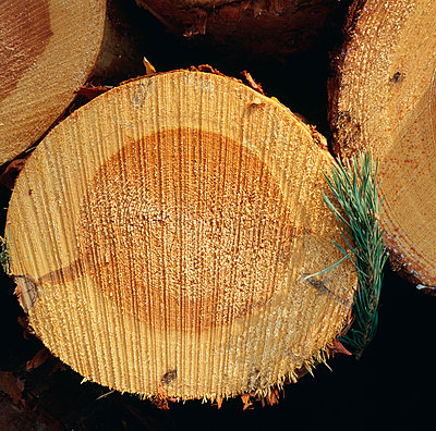 Wooden logs close-up - p575m1075179f by Kenneth Bengtsson