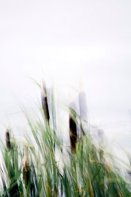 Abstract of cattails blowing in the wind against the sky - p7800063 by Andrew Geiger