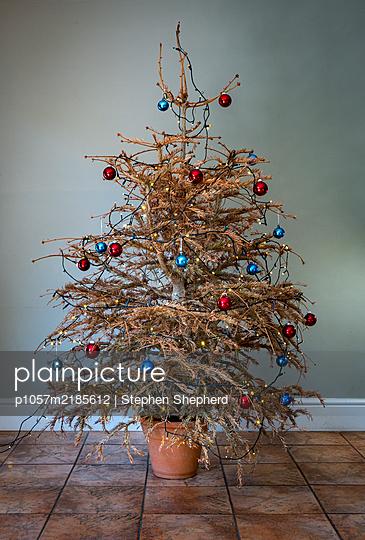 Trister Weihnachtsbaum - p1057m2185612 von Stephen Shepherd