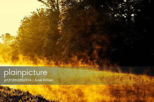 Trees and channel against the light - p1312m2262374 by Axel Killian
