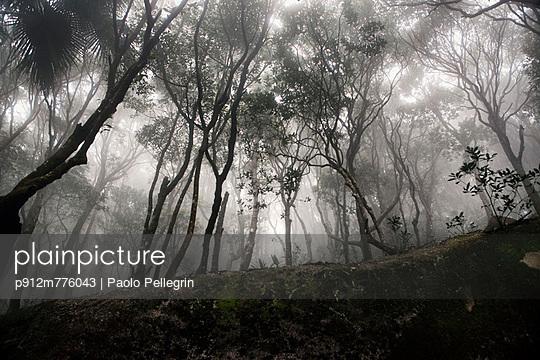 p912m776043 von Paolo Pellegrin