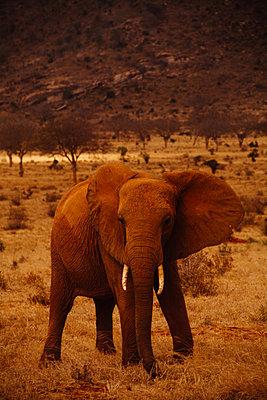 Tsavo East National Park - p1002m833707 by christian plochacki