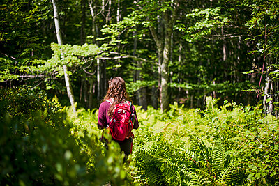 Woman hiking in forest in Acadia National Park, Bar Harbor, Maine, USA - p343m1543685 by Cate Brown