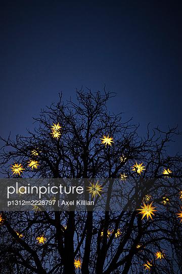 Germany, Tree with stars as Christmas illumination in the evening - p1312m2228797 by Axel Killian