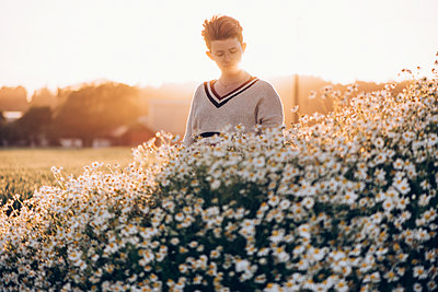 Field of Daisies - p1507m2100337 by Emma Grann