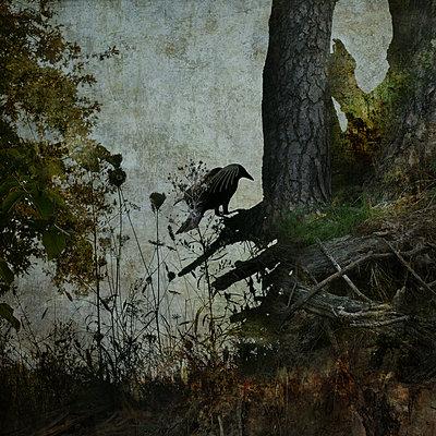 Black Winged Messenger Part II - p1633m2208887 von Bernd Webler